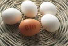 Biopotraviny - dnešní hit