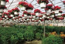 Jsou ekologicky pěstované potraviny lepší?